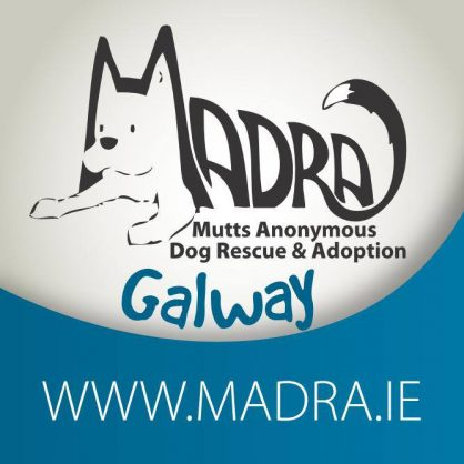 Unsere Partner Rescue in Irland