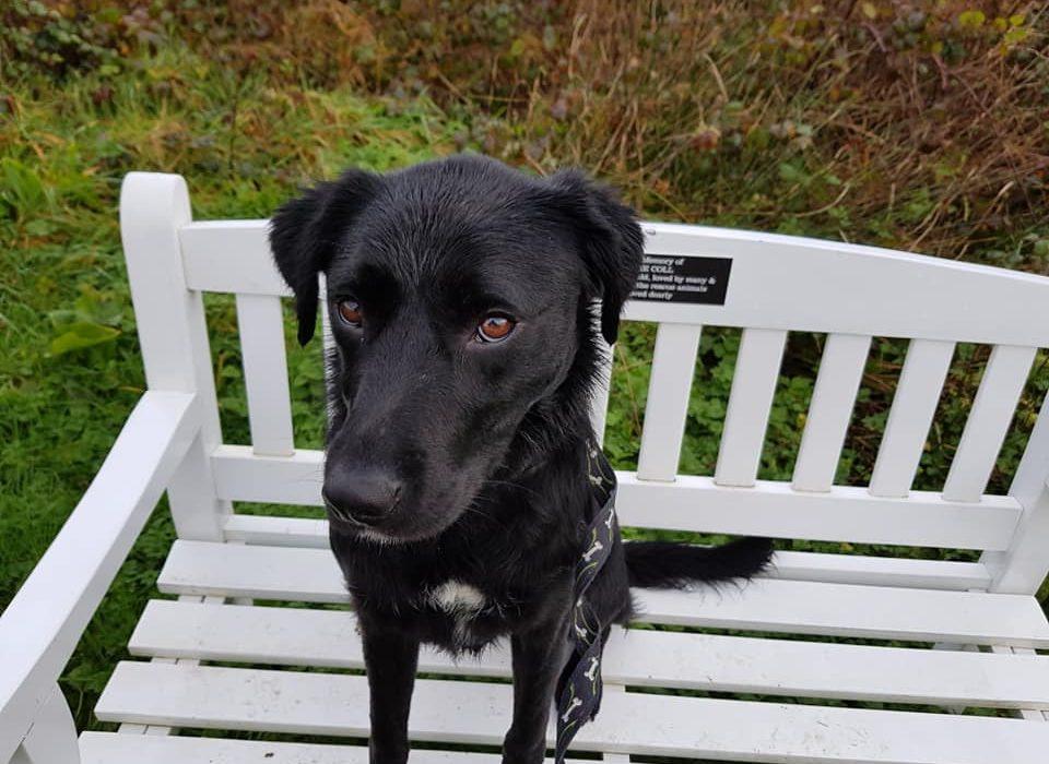 Vom Rescue Hund zum Schulhund